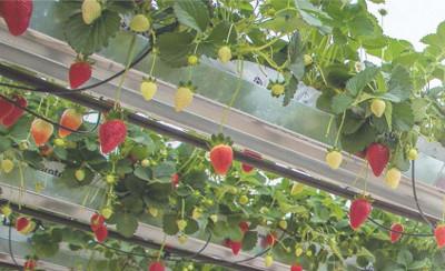Überwachung von Temperatur, Feuchtigkeit und Licht im Gewächshaus
