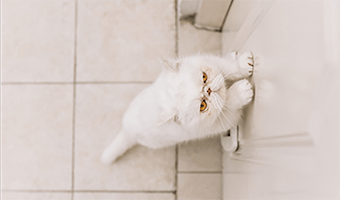 Monitorowanie zwierząt w domu i mieszkaniu