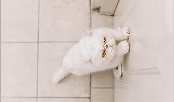 Überwachung von Tieren in Haus und Wohnung